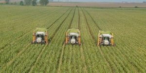 Pros And Cons Of Monoculture
