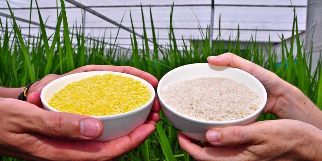 Advantages Of Using Biotechnology In Farming