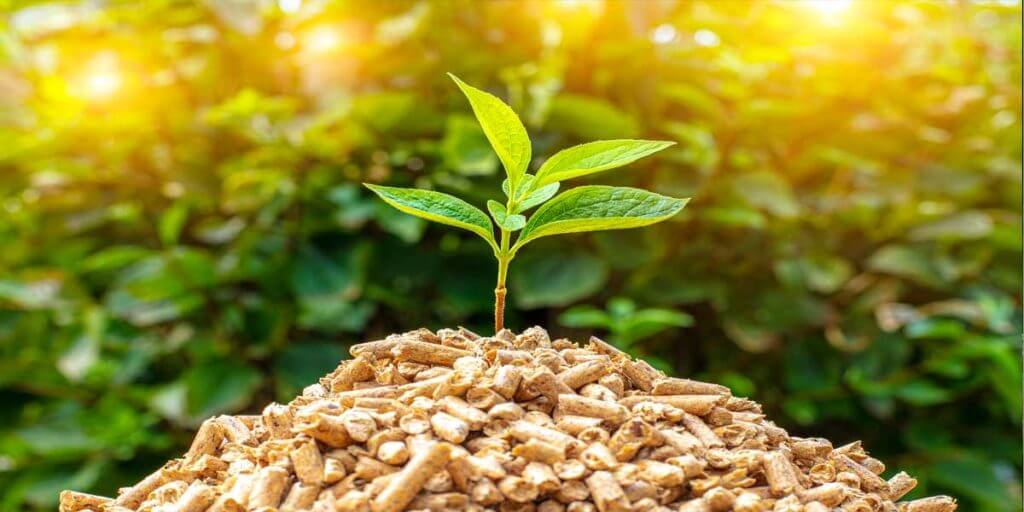 Facts About Biomass Energy