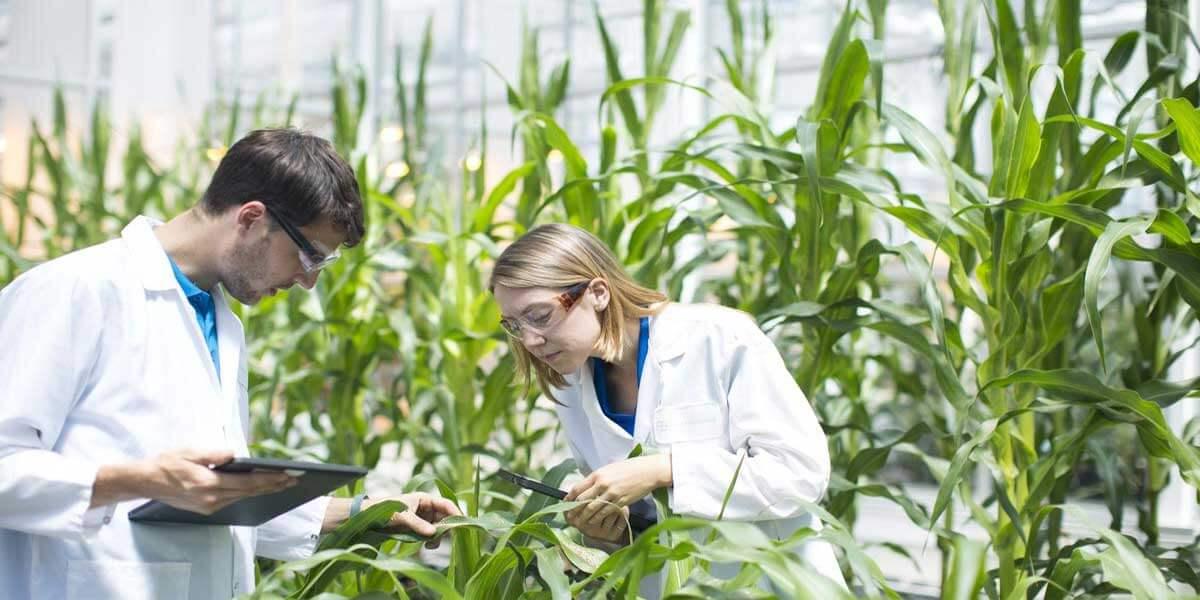 Pros And Cons Of Biotechnology In Agriculture
