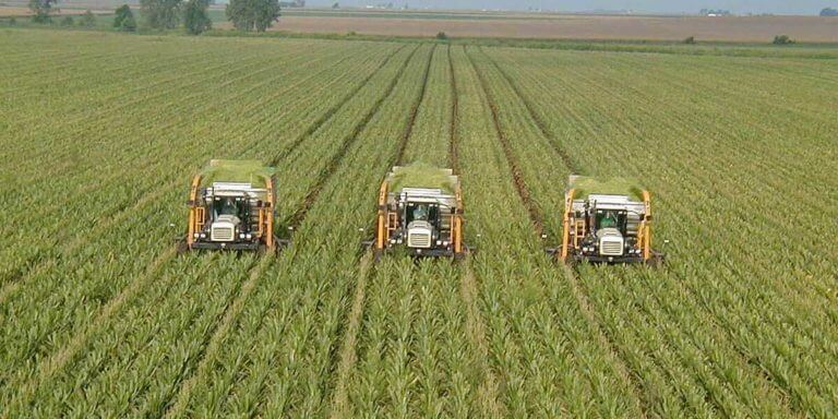 Pros And Cons Of Monoculture | What Is Monoculture, What Are Its Benefits?